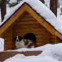 Custom Log Dog House